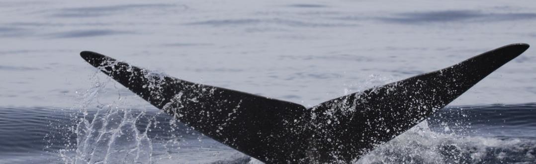San Diego Whale Watching