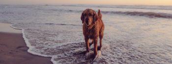 Pet Friendly Del Mar